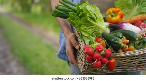 Basket with vegetables (cabbage, carrots, cucumbers, radish and peppers) in the hands of a farmer background of nature Concept of biological, bio products, bio ecology, grown by yourself, vegetarians. - Shutterstock ID 633563996