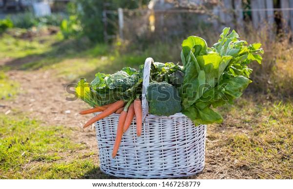 Basket of vegetables in the summer garden
