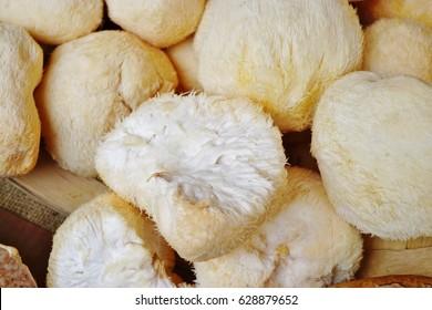 Basket of white pom pom Lion's Mane mushrooms (Hericium erinaceus)