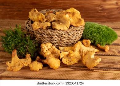 Basket of wild organic chanterelles mushrooms on old wooden table