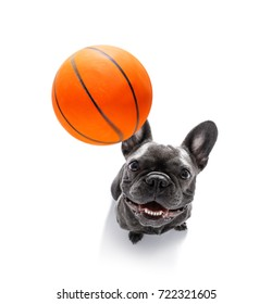 basketball  fench bulldog dog playing with  ball  , isolated on white background, wide angle fisheye view