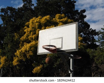 Basketball ring in front of tree