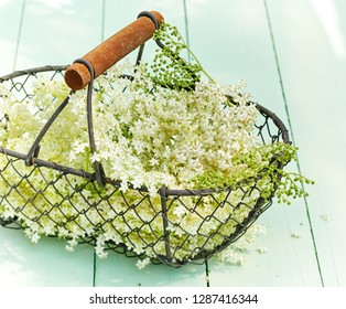 Basketful of dainty white elderflowers on green wood used for medicinal remedies as a diuretic, diaphoretic, for sinusitis and diabetes
