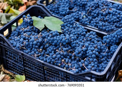 Baskets with fresh blue grapes