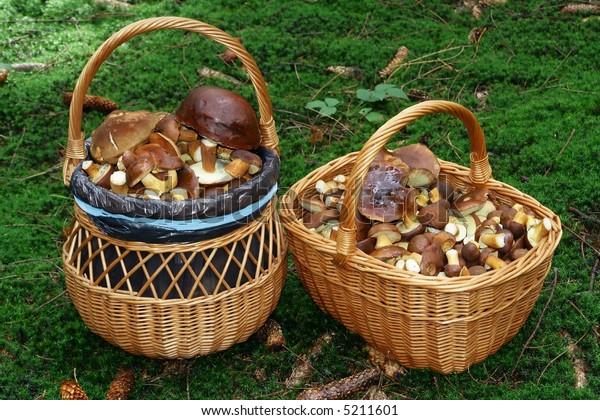 baskets of full mushroom in forest