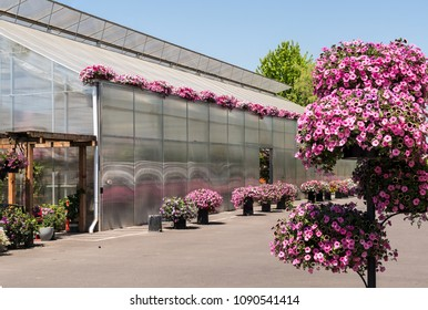 Baskets of Spring Flowers in Bloom in Nursery and greenhouse