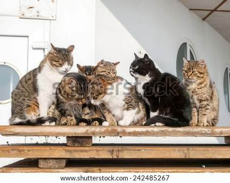 Basking cats on wooden pallets / boards