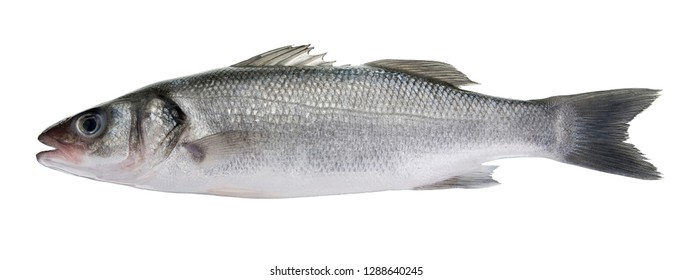 Bass fish isolated on white background