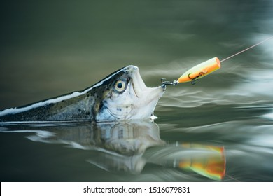 Bass fishing splash. Trout. Fishing. Still water trout fishing. Catching a big fish with a fishing pole