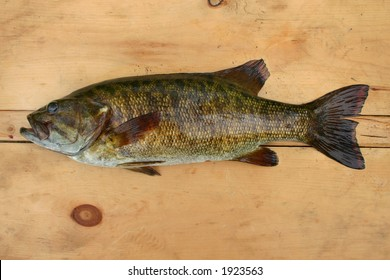 Bass on wood