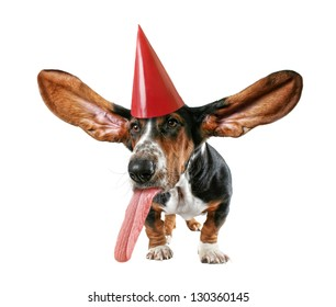 a basset hound with big ears with a birthday hat on