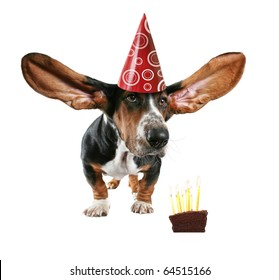 a basset hound with big ears and cake