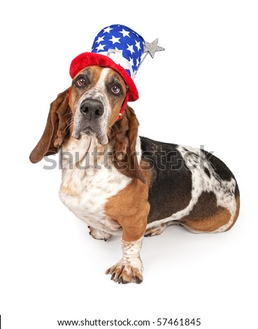 Basset Hound dog wearing a 4th of July hat. Isolated on white