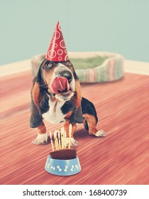 a basset hound licking birthday cake done in retro vintage style for a greeting card