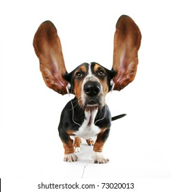a basset hound listening to music with giant ears