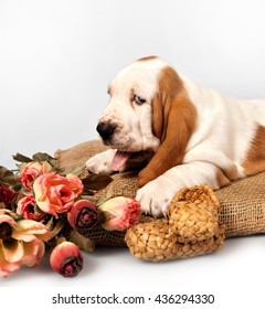 basset hound puppy lying on a pillow near a bouquet of roses