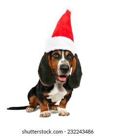 a basset hound sitting down on a white background with a santa hat on for christmas