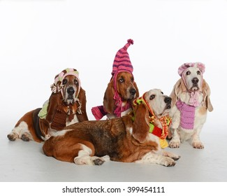 Bassets wearing hats and scarves