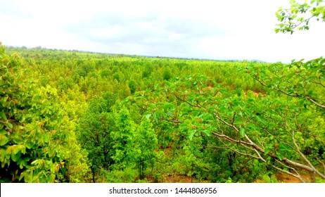 bast forest cen sky wellpaper