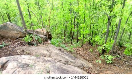 bast forest tree cen wellpaper