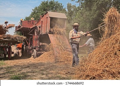 Bastia, Ravenna, Italy - August 25, 2019: farmers re-enacting the old farm works with an ancient threshing machine loaded with ears of corn during the country fair Wheat Festival