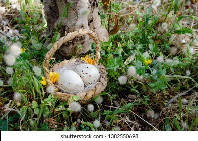 Bastket with two quil eggs in the gras with flowers - easter concept.