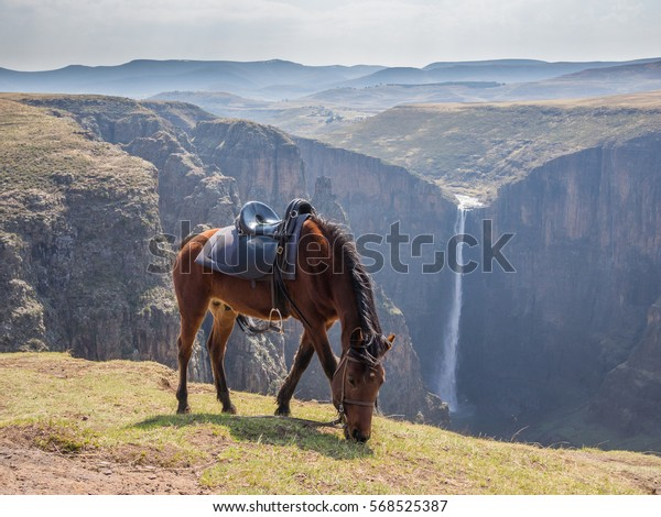 Basuto pony in front of Maletsunyane Falls and large canyon in mountainous highlands, Semonkong, Lesotho, Africa.