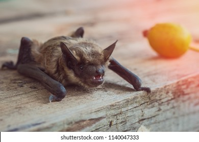 A bat close-up of a muzzle on a wooden table in the afternoon
