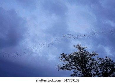 Bat colony on the sky