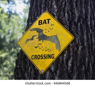 Bat crossing sign fixed to a tree in an area of a park where there are bat houses