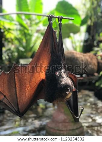 What Is A Daylight Bat   Bat Daylight Stock Photo Edit Now 1123254302 Shutterstock