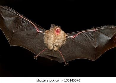 A bat flying in a cave