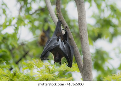Bat hanging on tree