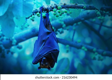 Bat hanging on a tree branch ,Malayan bat