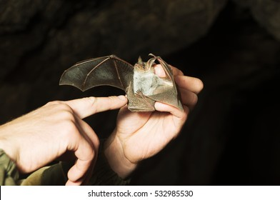 Bat hold in their hands. In a cave.