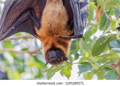 The bat is in the mammal. There is a small body with wings fly. Bats are the second largest mammal.