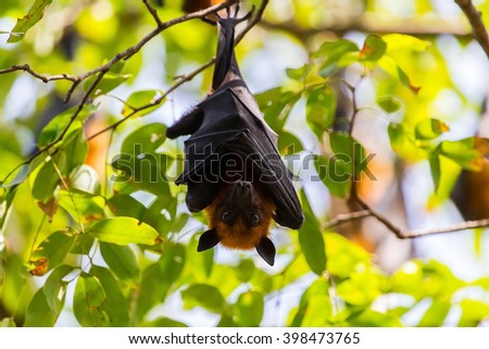 Bat on tree.
