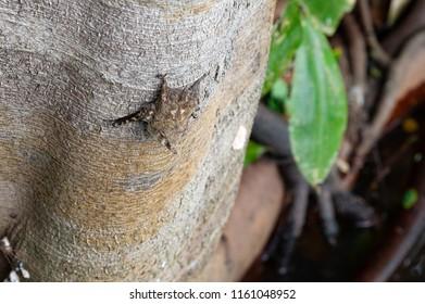 Bat on a tree in tropical rainforest, Manu National Park, Peru