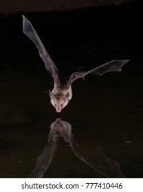 Bat reflection in water at night
