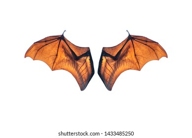 Bat wing isolated on white background ,Lyle's flying fox