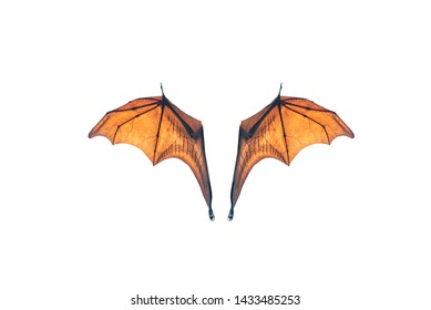 Bat wing isolated on white background (Lyle's flying fox)