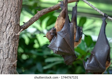 a bat in the zoo