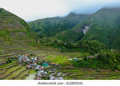 Batad rice terraces , ifugao benguet province