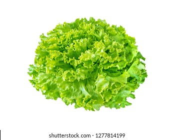 Batavia lettuce salad rosette isolated on white. Green leafy veggie.