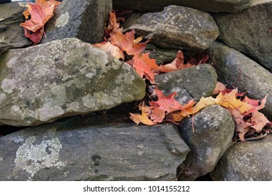 A batch of fresh fallen autumn leaves sit in the crevasses of a old-fashioned rock wall dividing properly lines in rural vermont