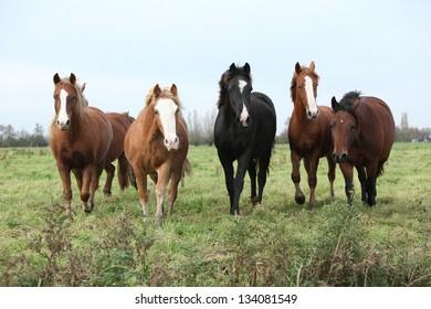 Batch of horses looking on autumn pasturage