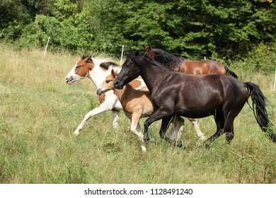 Batch of horses running on pasturage in summer
