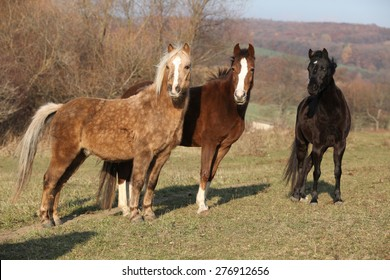 Batch of horses standing on autumn pasturage together