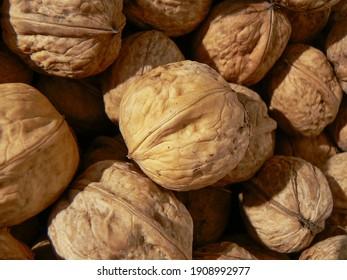 batch lot of walnut nut dry drying in sun