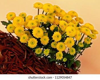 batch of yellow flower